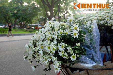 Pho phuong Ha Noi dep nao long mua cuc hoa mi - Anh 5