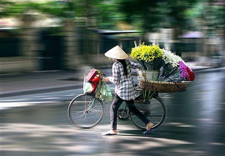 "Ha Noi diu dang mua cuc hoa mi ""ve"" pho - Anh 10"