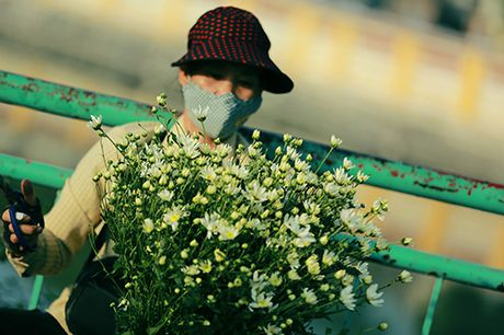 "Ha Noi diu dang mua cuc hoa mi ""ve"" pho - Anh 11"