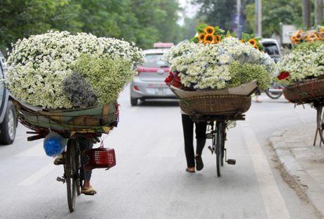 Cuc hoa mi tinh khoi dan loi Dong ve - Anh 13