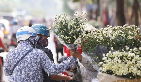 Cuc hoa mi tinh khoi dan loi Dong ve - Anh 15