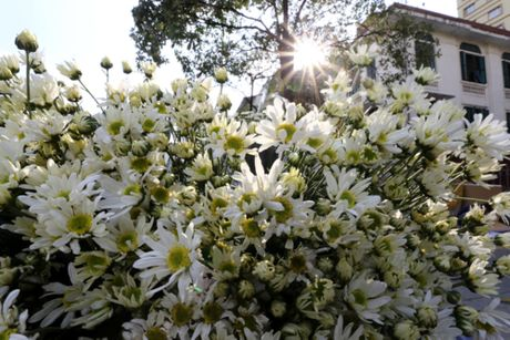 Cuc hoa mi tinh khoi dan loi Dong ve - Anh 16