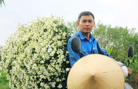 Cuc hoa mi tinh khoi dan loi Dong ve - Anh 17