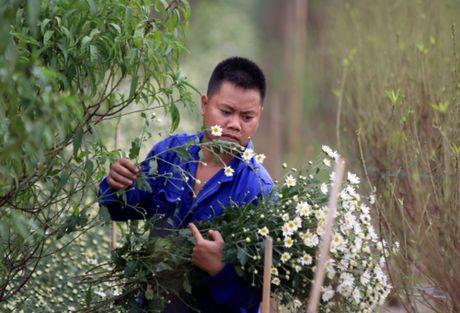 Cuc hoa mi tinh khoi dan loi Dong ve - Anh 19