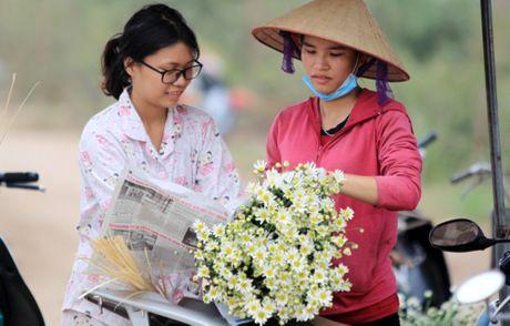 Cuc hoa mi tinh khoi dan loi Dong ve - Anh 20