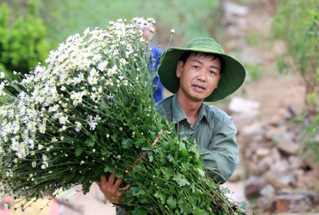 Cuc hoa mi tinh khoi dan loi Dong ve - Anh 8