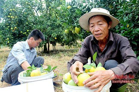 Cam Vinh buoc vao chinh vu voi 700 trieu dong/ha - Anh 4