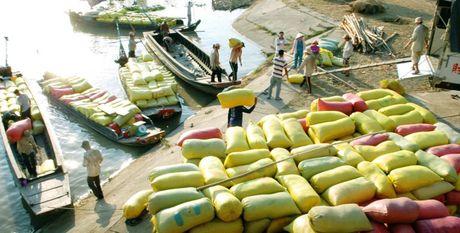 Nong dan Thai khon don vi gia gao - Anh 1
