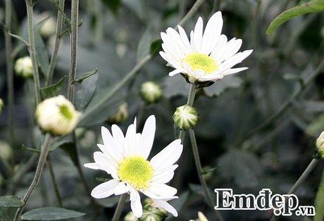 Cuc hoa mi ro mua, nguoi trong lai khung - Anh 2