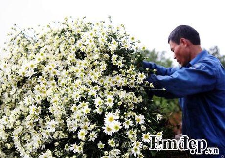 Cuc hoa mi ro mua, nguoi trong lai khung - Anh 7