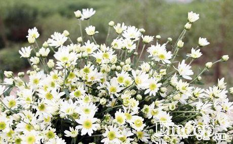 Cuc hoa mi ro mua, nguoi trong lai khung - Anh 9