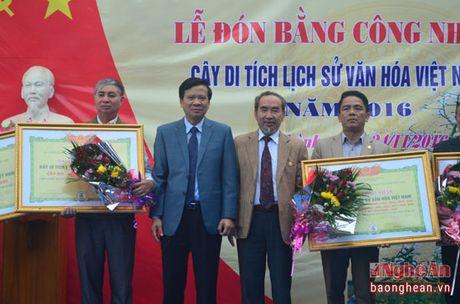 16 cay co thu o Yen Thanh duoc cong nhan di san lich su van hoa - Anh 1