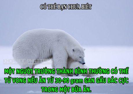 DOC-LA: Loai ky nhong so huu con mat thu 3 de cam nhan do sang - Anh 1