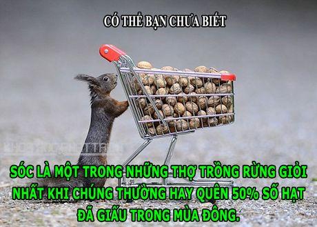 DOC-LA: Loai ky nhong so huu con mat thu 3 de cam nhan do sang - Anh 6