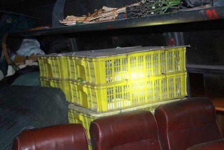 Xe khach cho 120 con ho mang nam chung hanh khach - Anh 1