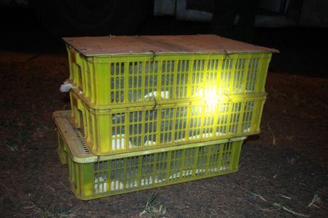 Kinh hoang 120 con ran ho mang nam chung voi khach - Anh 2