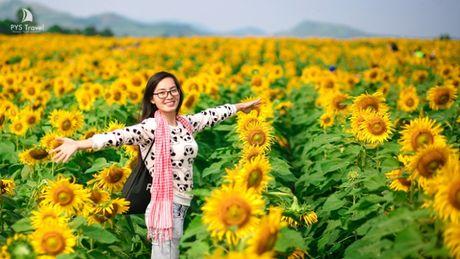 Le hoi hoa Huong Duong lan dau tien tai Nghe An - Anh 1