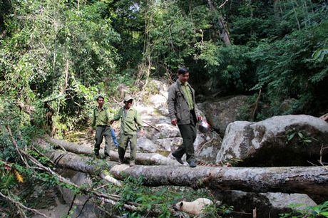 Hap dan Khu bao ton thien nhien Ta Dung ( Dak Nong) - Anh 2