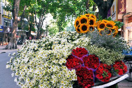 Cuc hoa mi khoe sac trang trong gio lanh dau dong Ha Noi - Anh 10