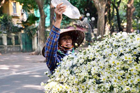 Cuc hoa mi khoe sac trang trong gio lanh dau dong Ha Noi - Anh 11