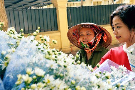 Cuc hoa mi khoe sac trang trong gio lanh dau dong Ha Noi - Anh 12