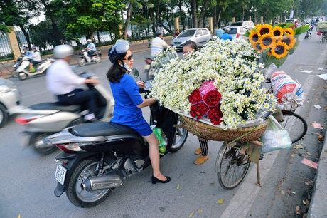 Cuc hoa mi khoe sac trang trong gio lanh dau dong Ha Noi - Anh 13