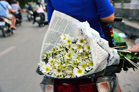 Cuc hoa mi khoe sac trang trong gio lanh dau dong Ha Noi - Anh 14