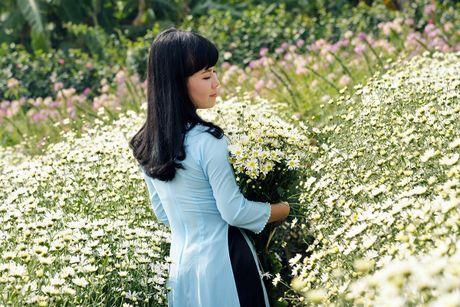 Cuc hoa mi khoe sac trang trong gio lanh dau dong Ha Noi - Anh 4
