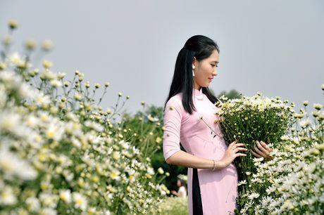 Cuc hoa mi khoe sac trang trong gio lanh dau dong Ha Noi - Anh 5