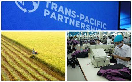 Tam dung TPP: Co thoi gian co cau lai va di vao san xuat lon - Anh 1