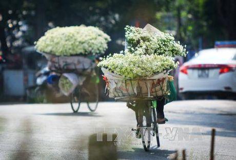 Mua cuc hoa mi ve pho - Anh 5
