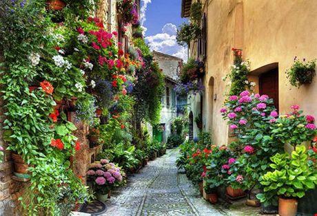 Ngat ngay voi nhung ngoi nha phu hoa day loi di - Anh 11