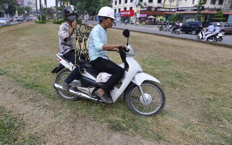 Co bi giam, heo ua o duong dep nhat Viet Nam - Anh 5