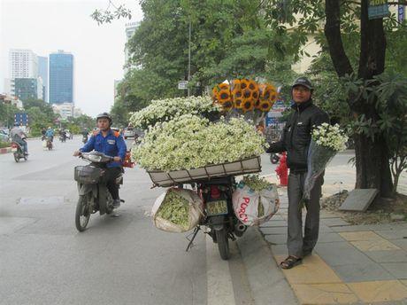 [Anh]: Cuc hoa mi ngap tran tren pho Ha Noi - Anh 10
