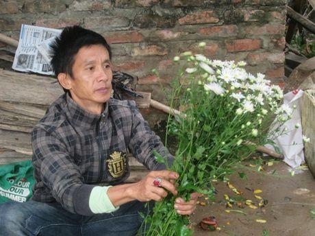 [Anh]: Cuc hoa mi ngap tran tren pho Ha Noi - Anh 3