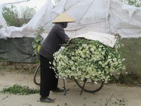 [Anh]: Cuc hoa mi ngap tran tren pho Ha Noi - Anh 5