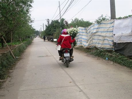 [Anh]: Cuc hoa mi ngap tran tren pho Ha Noi - Anh 7