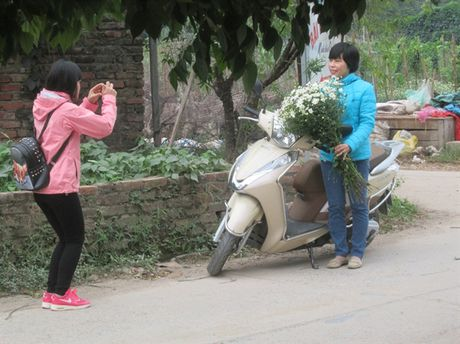 [Anh]: Cuc hoa mi ngap tran tren pho Ha Noi - Anh 8
