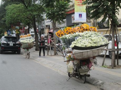 [Anh]: Cuc hoa mi ngap tran tren pho Ha Noi - Anh 9