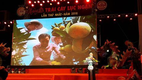 Tung bung ngay hoi trai cay Luc Ngan lan thu nhat nam 2016 - Anh 2