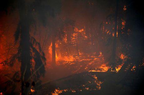 Canh tan hoang sau vu chay rung kinh hoang o Israel - Anh 10