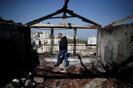 Canh tan hoang sau vu chay rung kinh hoang o Israel - Anh 2