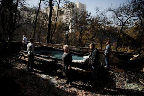 Canh tan hoang sau vu chay rung kinh hoang o Israel - Anh 6