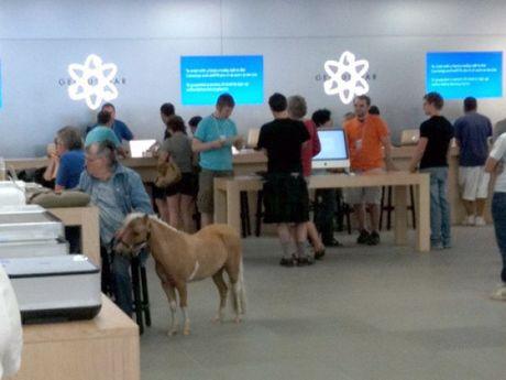 """Nhung hinh anh """"kho do"""" chi co tai cua hang Apple Store - Anh 11"""