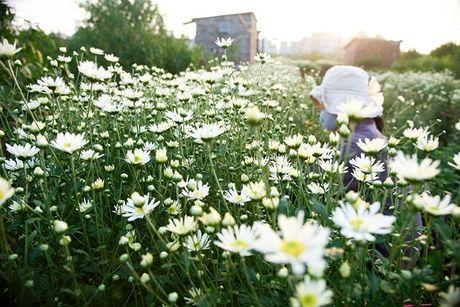 Dia diem chup anh voi hoa cuc hoa mi cua gioi tre Ha thanh - Anh 1