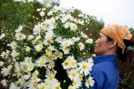 Dia diem chup anh voi hoa cuc hoa mi cua gioi tre Ha thanh - Anh 2