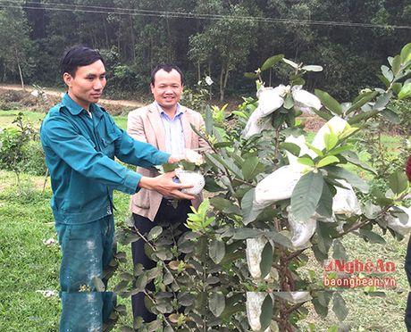 Thanh Chuong: Hon 3.000 ho nong dan co thu nhap tu 100- 200 trieu dong/nam - Anh 1