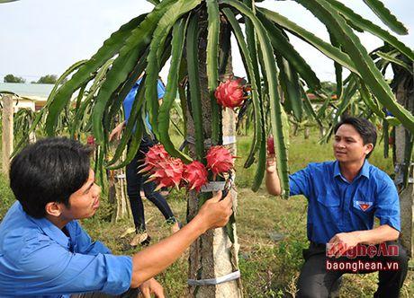 Thanh Chuong: Hon 3.000 ho nong dan co thu nhap tu 100- 200 trieu dong/nam - Anh 2