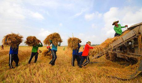 Xuat khau gao co kha nang chi dat 5 trieu tan - Anh 1