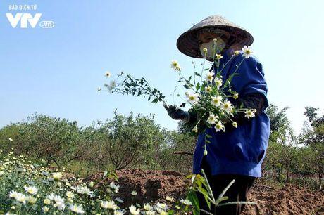 Nguoi trong hoa Nhat Tan phan khoi vi cuc hoa mi duoc mua, duoc gia - Anh 10